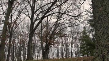 arbres par une journée froide video