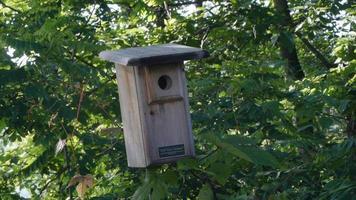 Birdhouse nestled among trees video