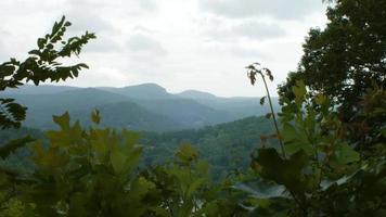 montañas cubiertas de árboles por el lago