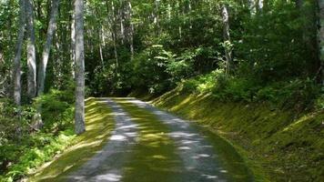 estrada coberta de musgo