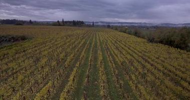 Toma aérea de drone de uvas de viñedo en otoño portland oregon en 4k video