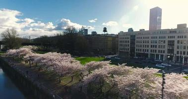 Aerial Drone Shot of Oregon Downtown Cherry Blossoms in 4K video