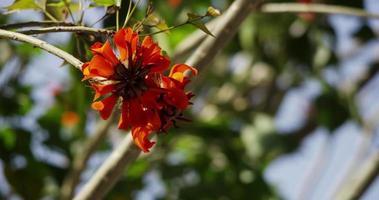 Hermosas flores naranjas moviéndose en un día ventoso y claro en 4k video