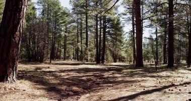 Toma panorámica lenta que va a la derecha del relajante bosque verde en 4k