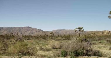 Wanderaufnahme der Wüstenszene mit Bergen, Kakteen und Büschen in 4k