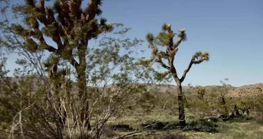 cena do deserto com montanhas, cactos e árvores espinhosas em primeiro plano em 4k