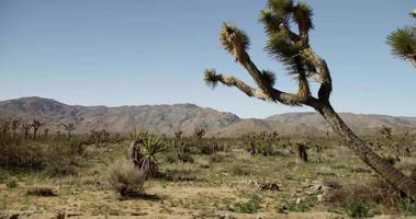 reisender Schuss in der rustikalen Straße der Wüstenelemente in 4k