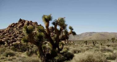 Reisen Schuss in rustikale Straße von Felsen und Wüstenpflanzen in 4k