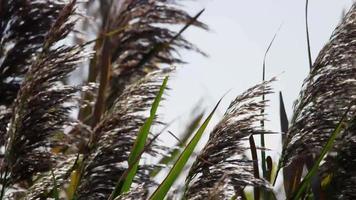 close up de ramos de palmeira movendo-se com o vento em slowmotion 4k