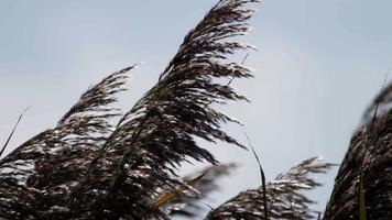 close up de palmeira movendo-se pelo vento em slowmotion 4k