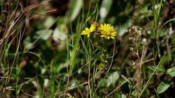 close up de pequenas flores e grama verde movida pelo vento em 4k