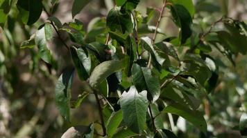 Cerca de hojas verdes maltratadas moviéndose lentamente en 4k