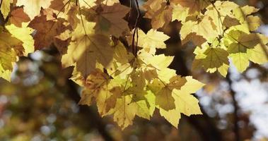 bela foto estática de galhos de árvores com folhas amarelas em 4k video