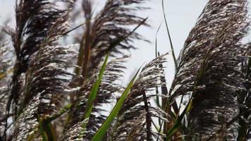 close up de galhos de palmeiras marrons e folhas verdes movidas pelo vento em 4k