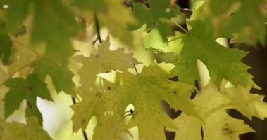 close up de galhos de árvores com folhas verdes e amarelas movidas pelo vento em 4k