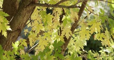 hermosa textura de hojas, ramas y troncos en 4k