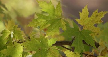 Extreme close up of beautiful green leaves moving slowly by the wind with nature background in 4K