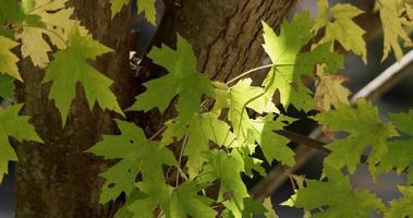 close-up extremo de folhas verdes com fundo de tronco em 4k video