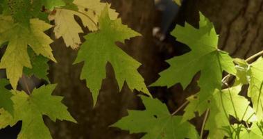 folhas verdes em primeiro plano em foco movidas pelo vento com folhas desfocadas em fundo em 4k video
