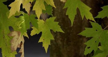 belles feuilles vertes sur le dessus de la scène avec des mouvements doux en 4k video