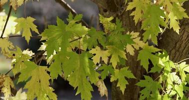 textura amarela e verde de folhas com fundo desfocado marrom com troncos em 4k video