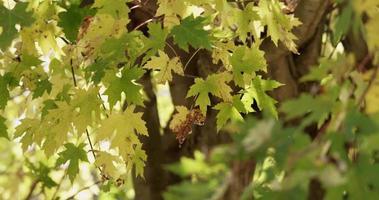 textura de la naturaleza de hojas amarillas y verdes con primer plano y fondo desenfocados en 4k