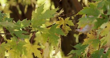textura de galhos com folhas amarelas e verdes com fundo de floresta desfocado em 4k
