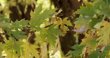lindos galhos de árvores criando uma textura natural com floresta desfocada no fundo em 4k