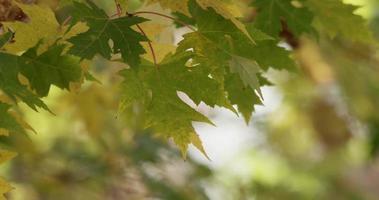 folhas verdes movidas pelo vento com bokeh de fundo de árvores em 4k video