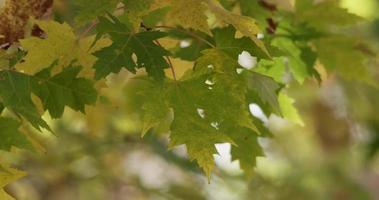 close-up extremo de folhas verdes com galhos desfocados no fundo em 4k video
