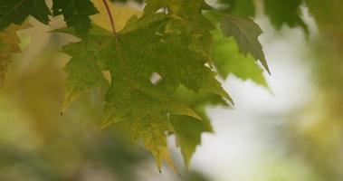 folha verde movida pelo vento com foground natural e fundo desfocado em 4k video
