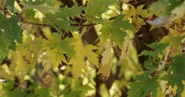 Green and yellow leaves in branches creating a natural beautiful texture in 4K