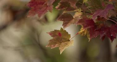 Detalle de hojas moteadas movidas por el viento sobre fondo desenfocado de ramas verdes en 4k