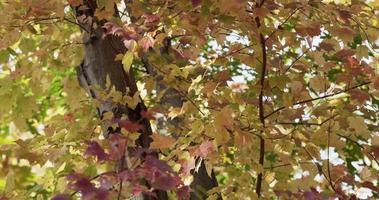 textura de la naturaleza de hojas verdes, rojas y amarillas en árboles forestales en 4k