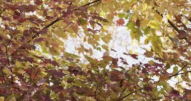 natur mall av röda och gröna blad rör sig långsamt i skogen i 4k