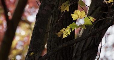 pequenos galhos com folhas manchadas movidos pelo vento em árvores desfocadas ao fundo em 4k