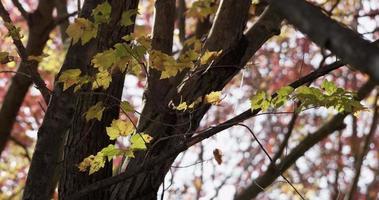 foto de baixo ângulo da textura da natureza com folhas, galhos e troncos em 4k