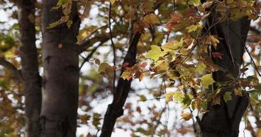 close up de galhos com folhas marrons e amarelas movidas lentamente pelo vento em 4k