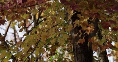 vários galhos de árvores no outono com folhas amarelas e marrons em 4k