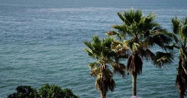 Toma panorámica lenta que va a la izquierda de palmeras con fondo de mar en 4k video