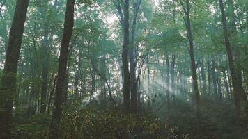 sol brillando rayos de luz a través de los árboles en el bosque | material de archivo gratis