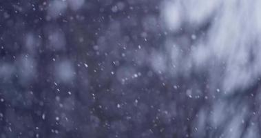 cena de inverno com neve caindo com caminho diagonal da esquerda para a direita no fundo da floresta em 4k video