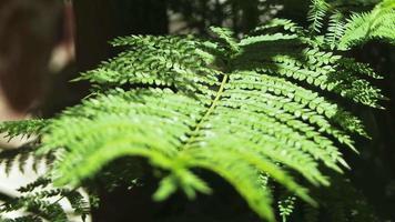 pequenas folhas verdes no galho video