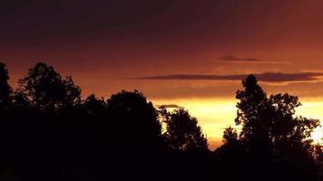 nascer do sol laranja com árvores em primeiro plano