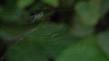 Nahaufnahme von Spinne und Spinnennetz