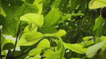 folhas verdes claras no jardim