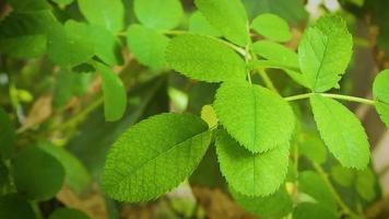 strukturierte Blätter im Garten