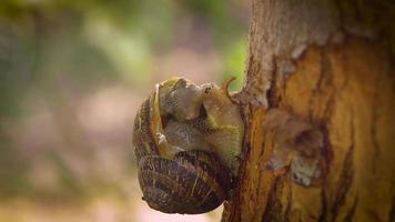 close-up do caracol na árvore
