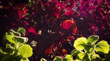 folhas verdes e violetas no jardim