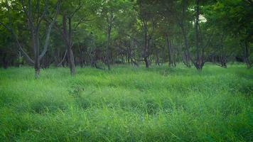 Bäume und Gras im Park